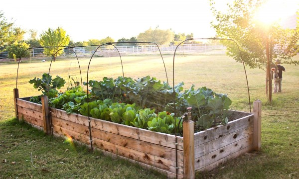 building-raised-garden-beds-raised-finley-and-oliver-our-raised-beds