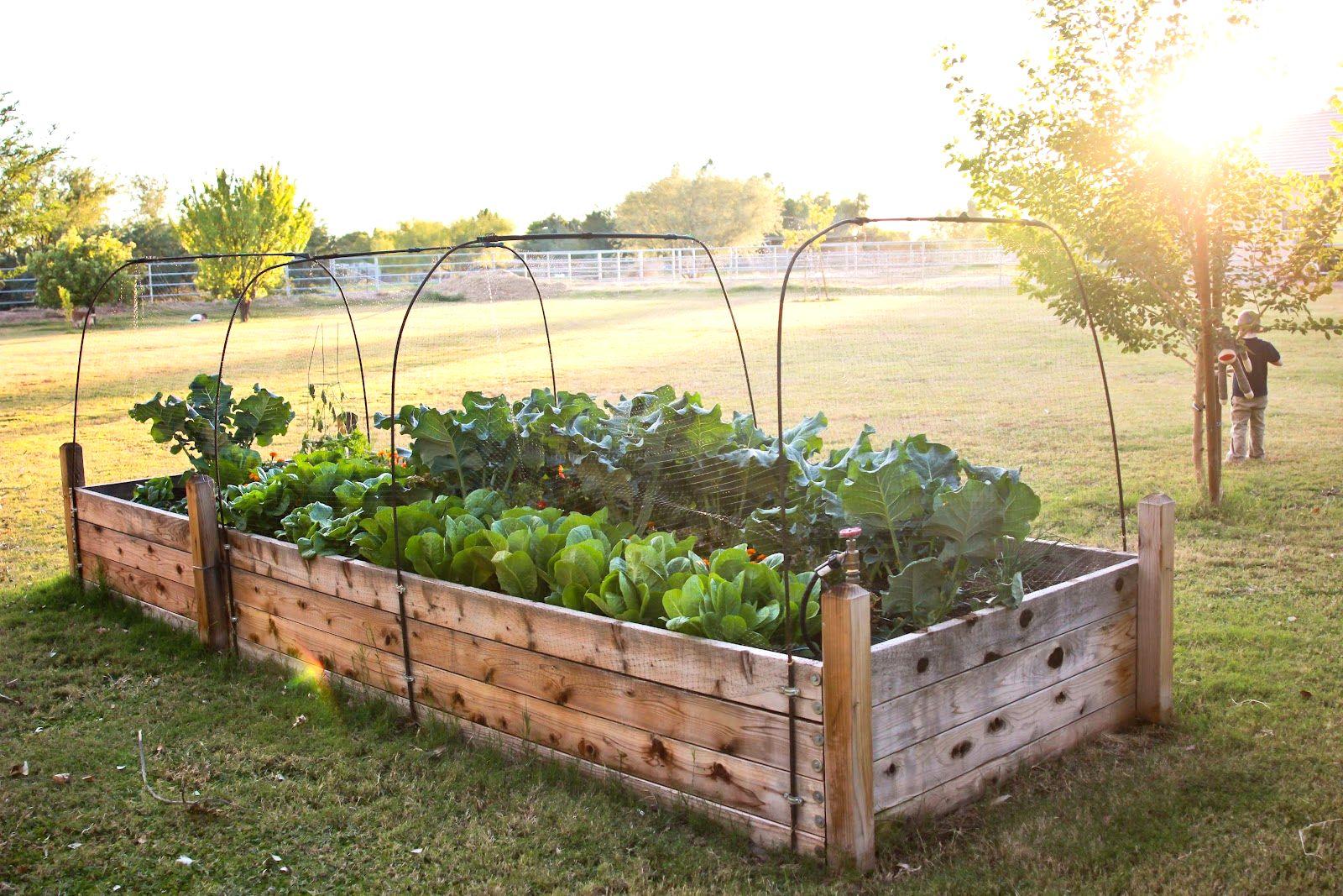 Building Raised Garden Beds Raised