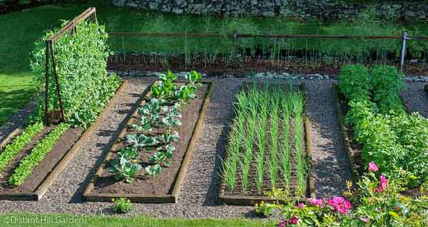Starting Your Own Vegetable Gardening in Your Backyard ...
