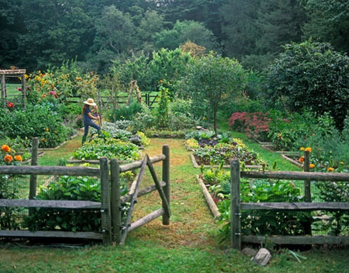 Starting Your Own Vegetable Gardening In Your Backyard Layout Part